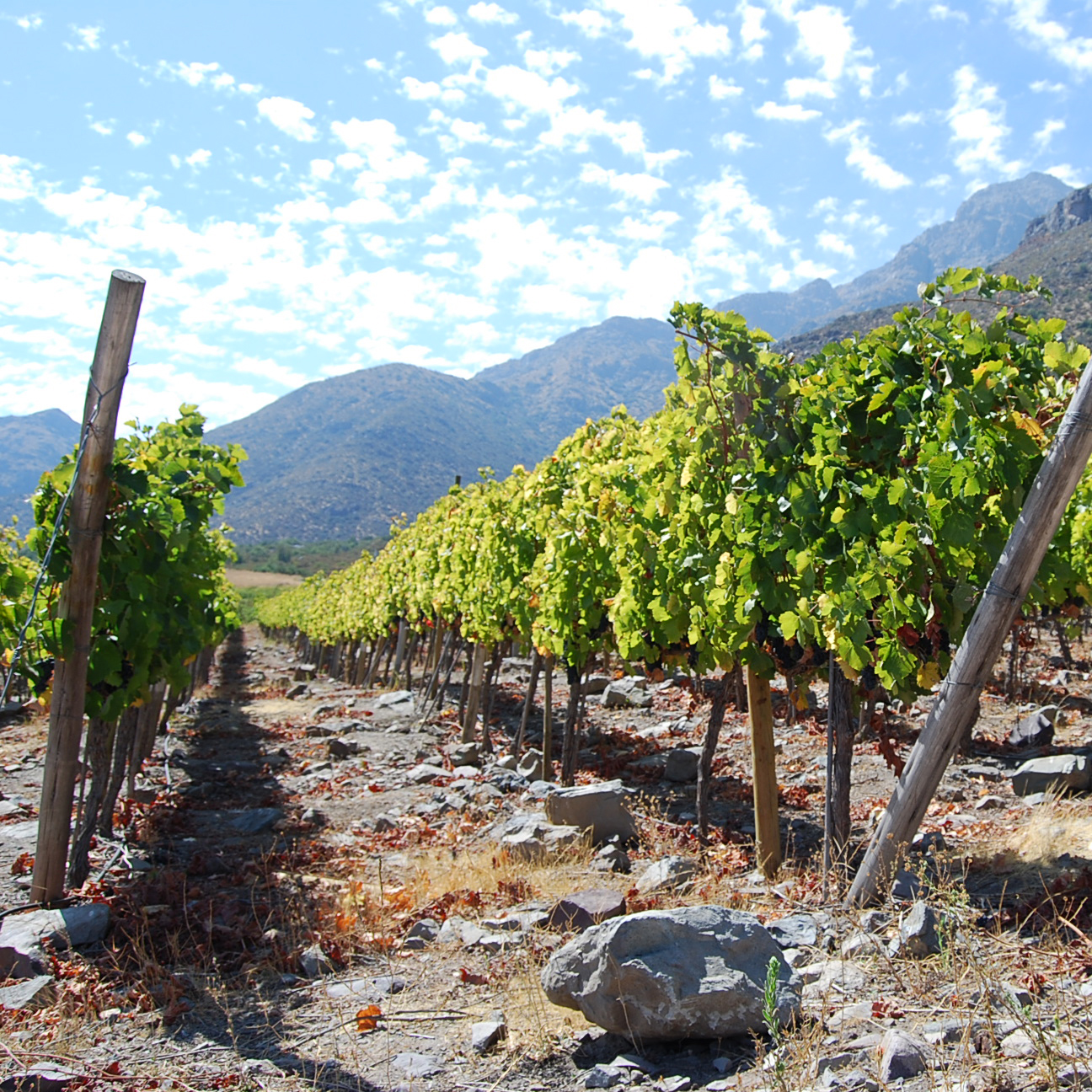 Reinventing a Chilean Winery