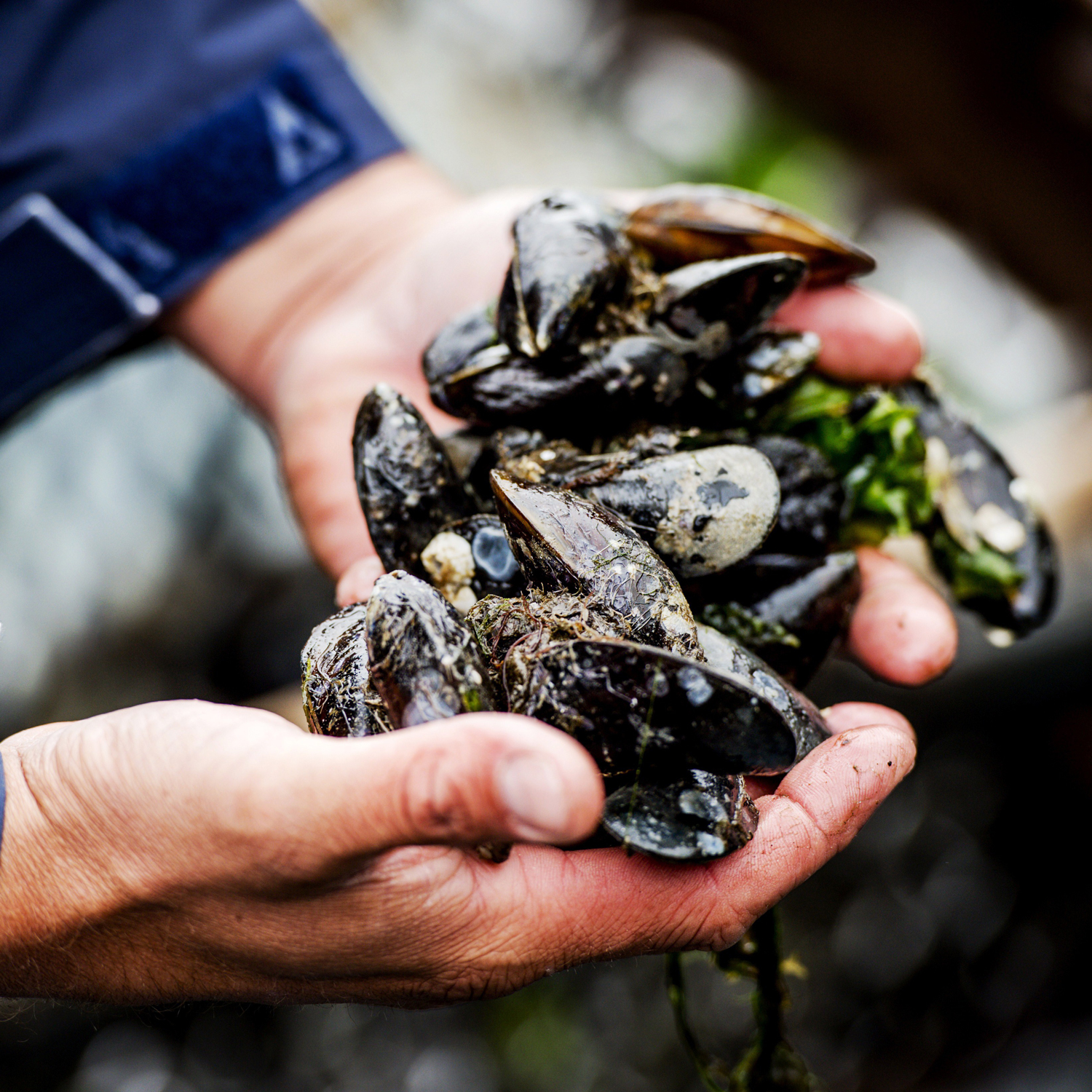 Are Mussels the New Honeybees?