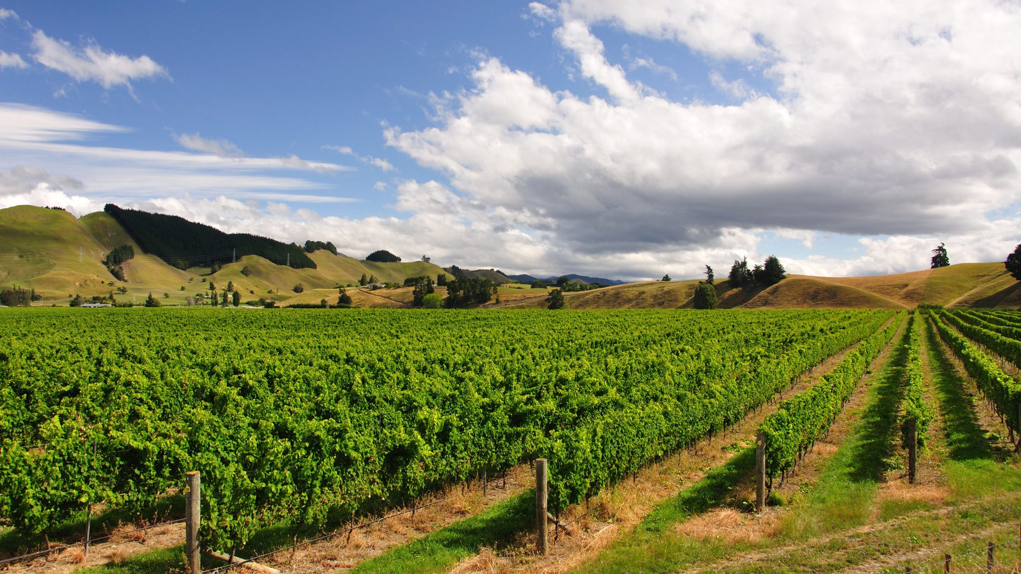 Brightwater Vineyard, New Zealand