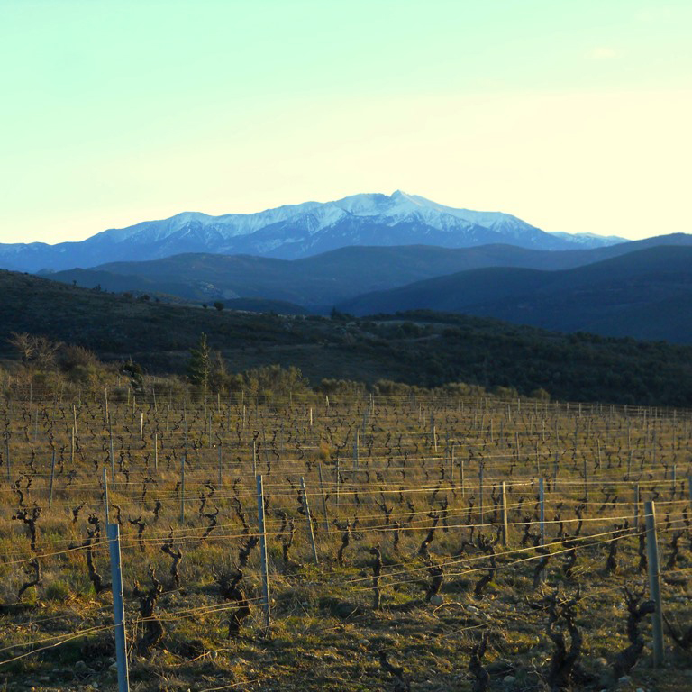 A Dry Wine Revolution in France's Roussillon