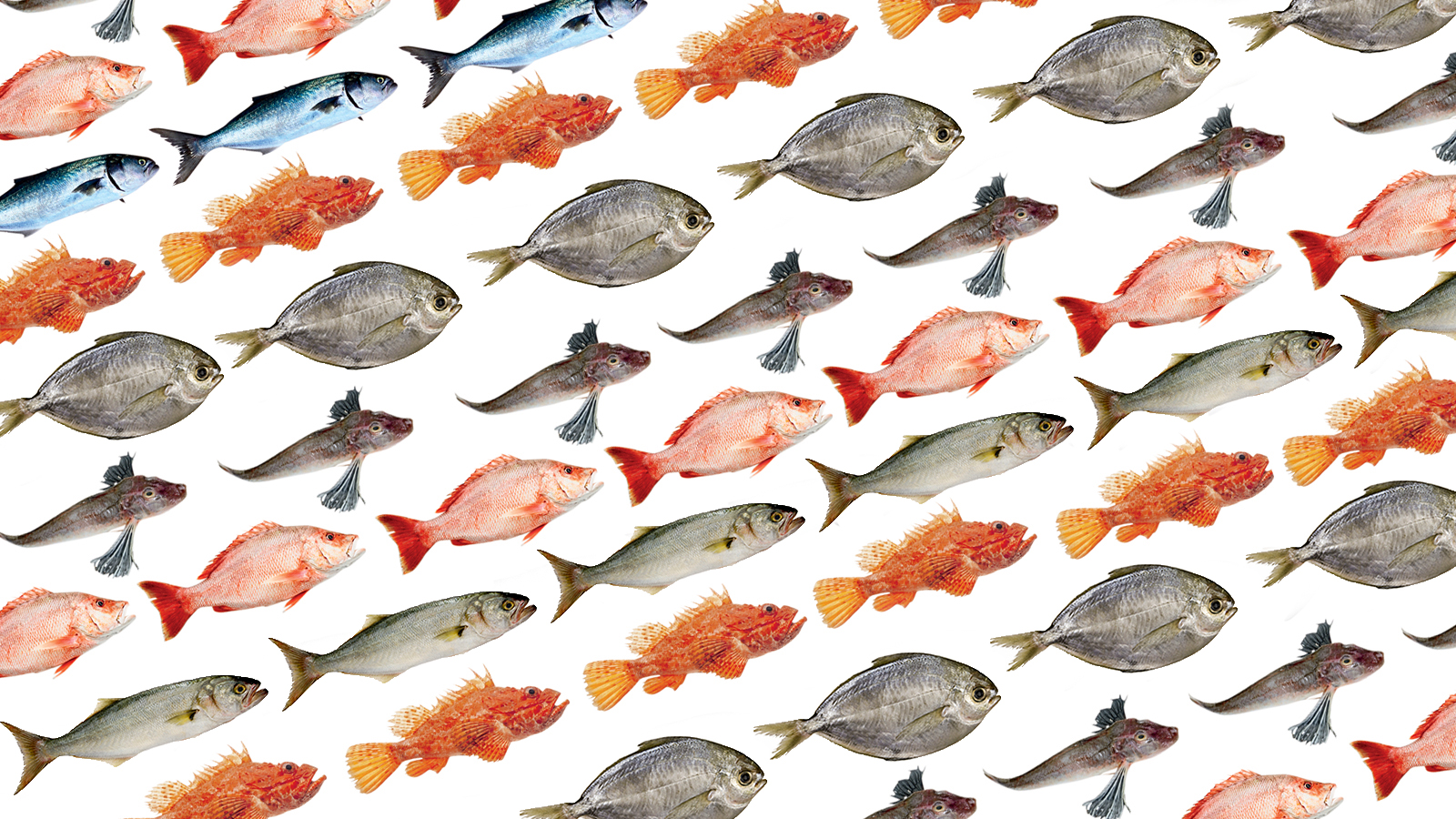 Here's How the World Could Save its Wild Fish Populations