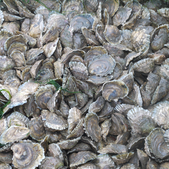 HD-201303-a-island-creek-oysters-close-up.jpg