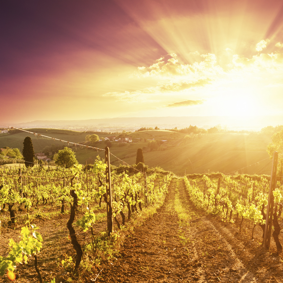 A Hot Future for Burgundy and Bordeaux