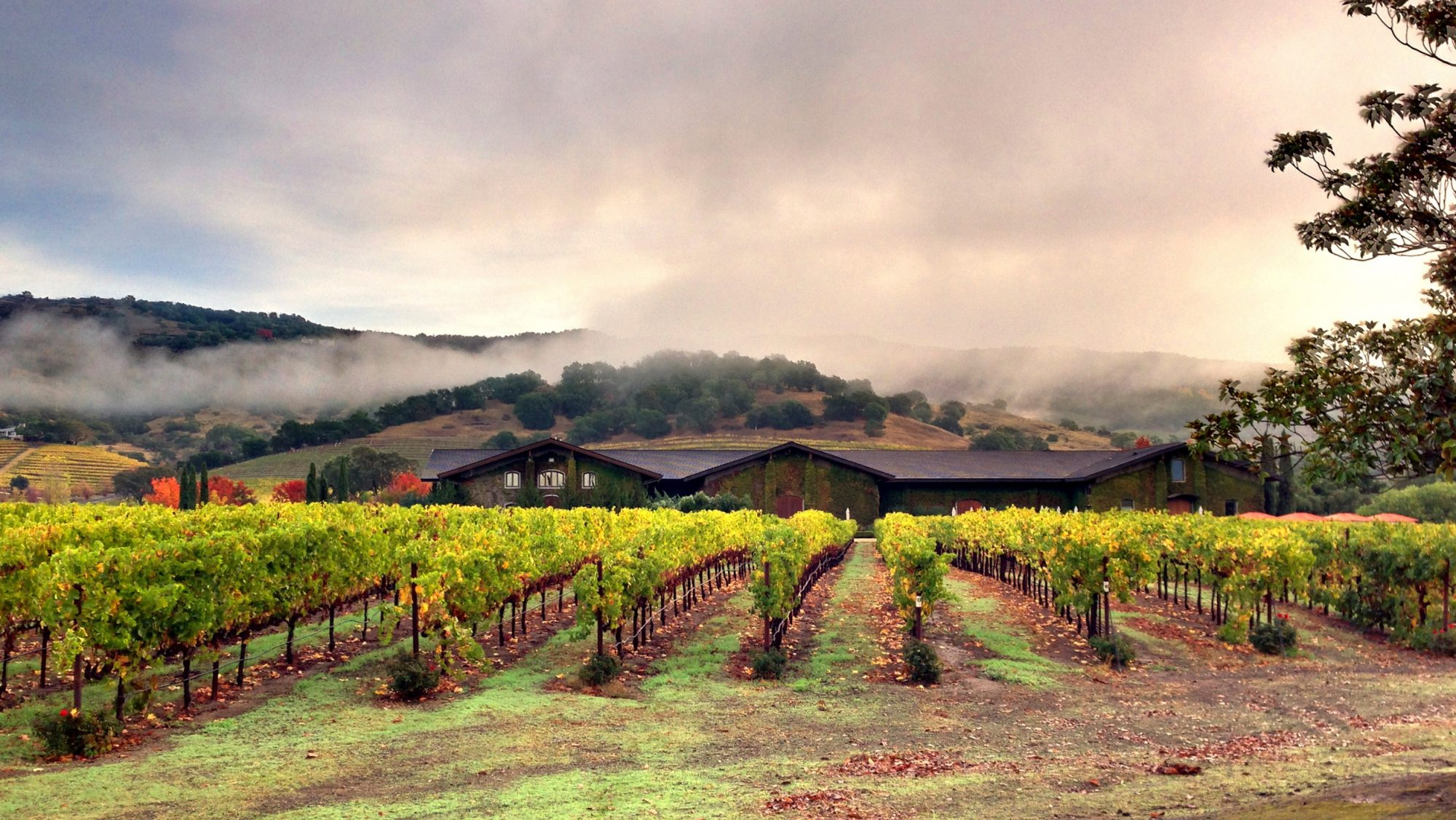 Napa Valley Winemakers Ask Feds for Stricter Label Standards