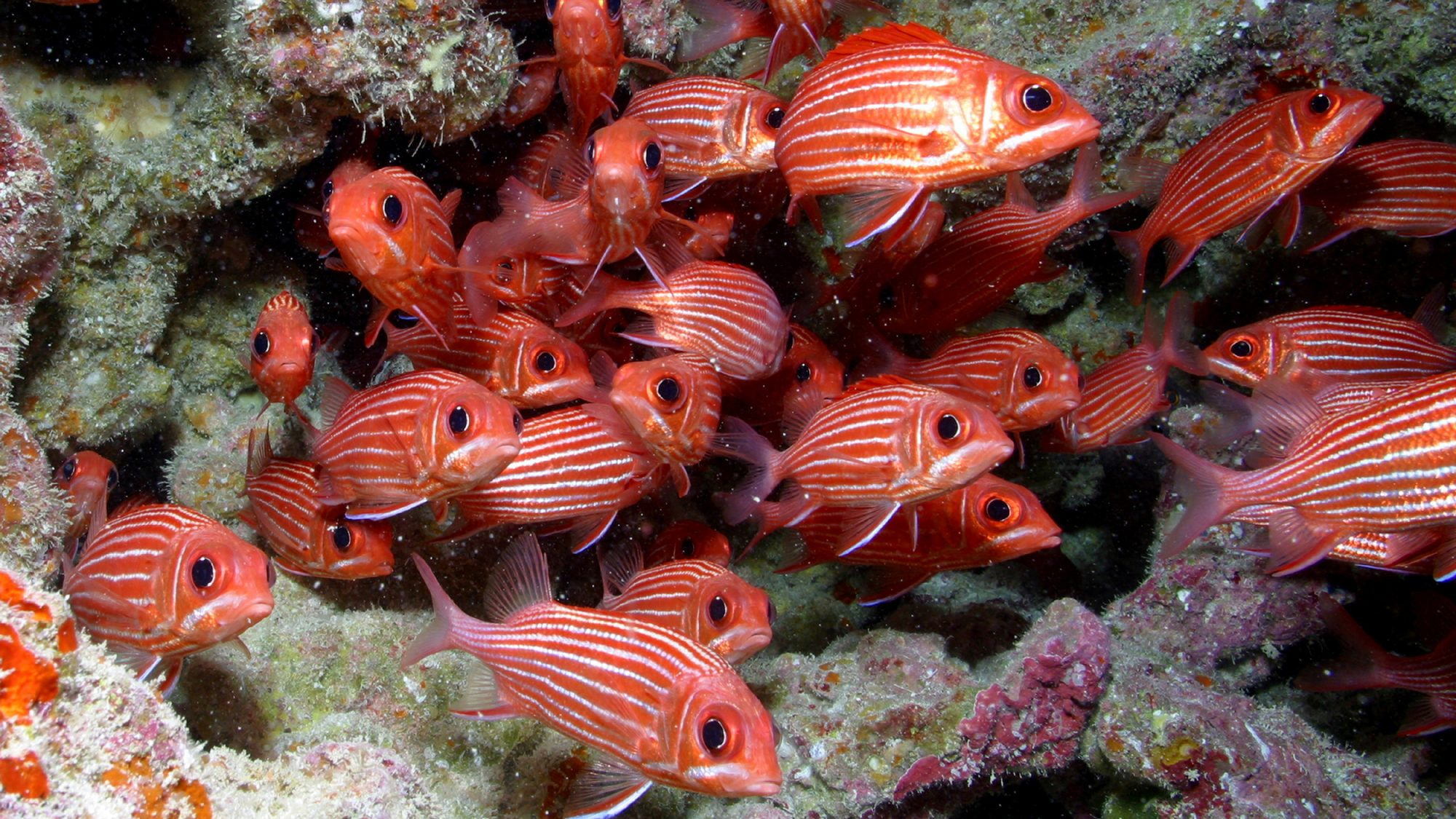 Papahānaumokuākea Marine National Monument