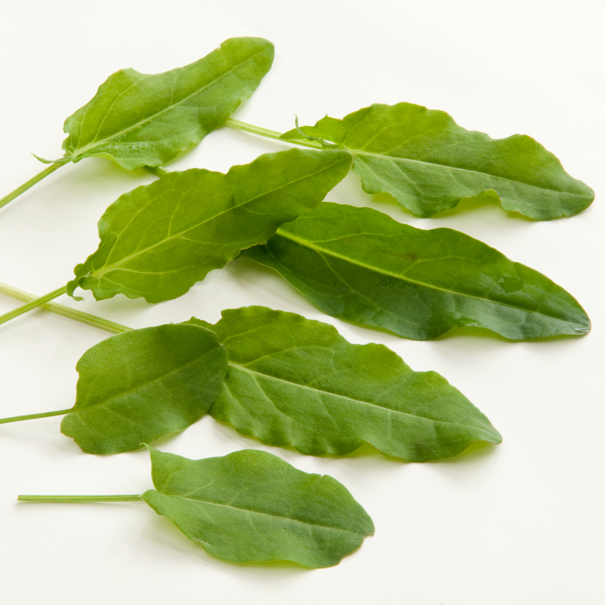 Sorrel Edible Weeds