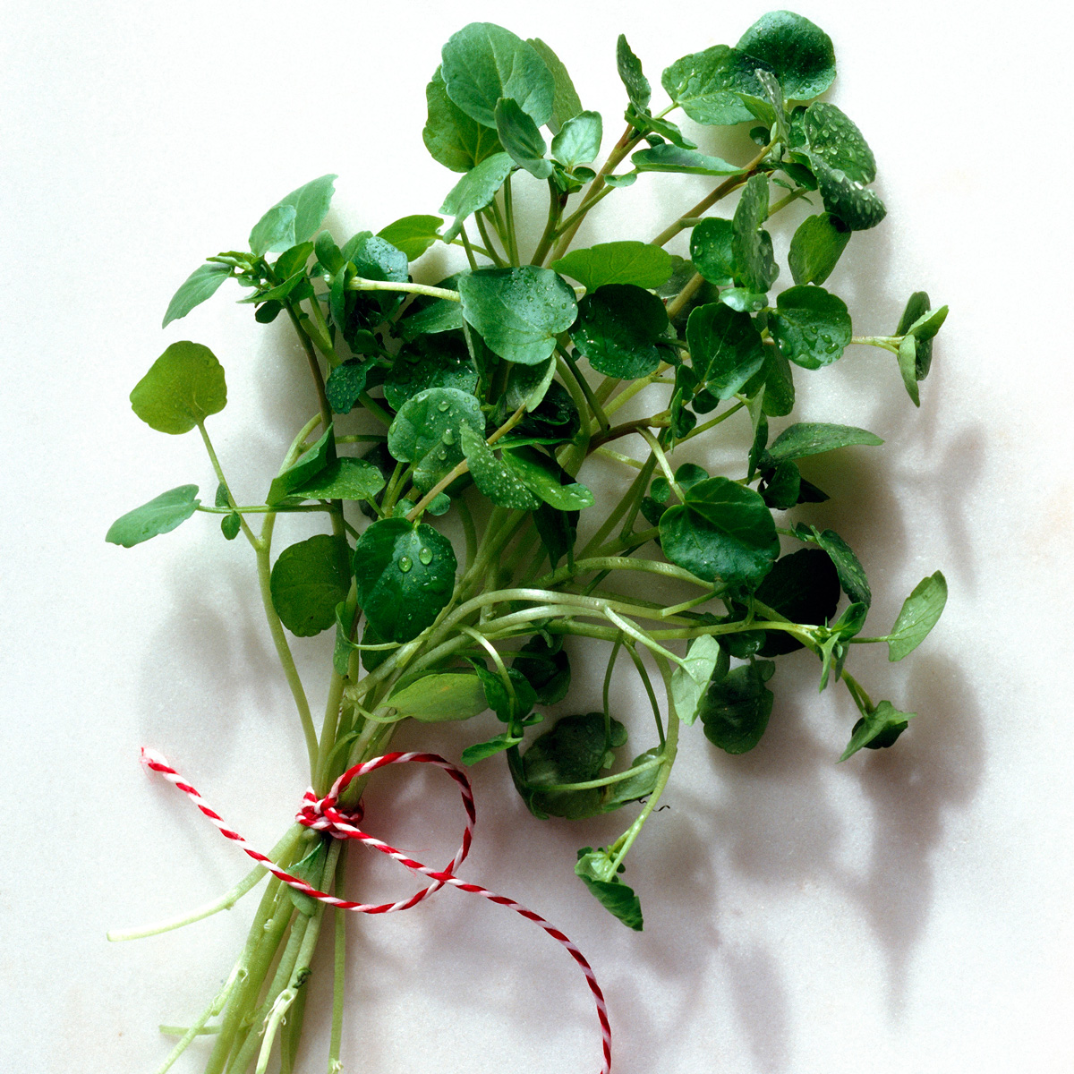 Watercress Edible Weeds