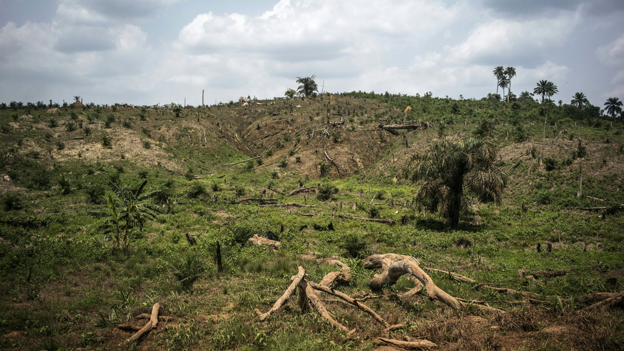 Deforestation Food Companies