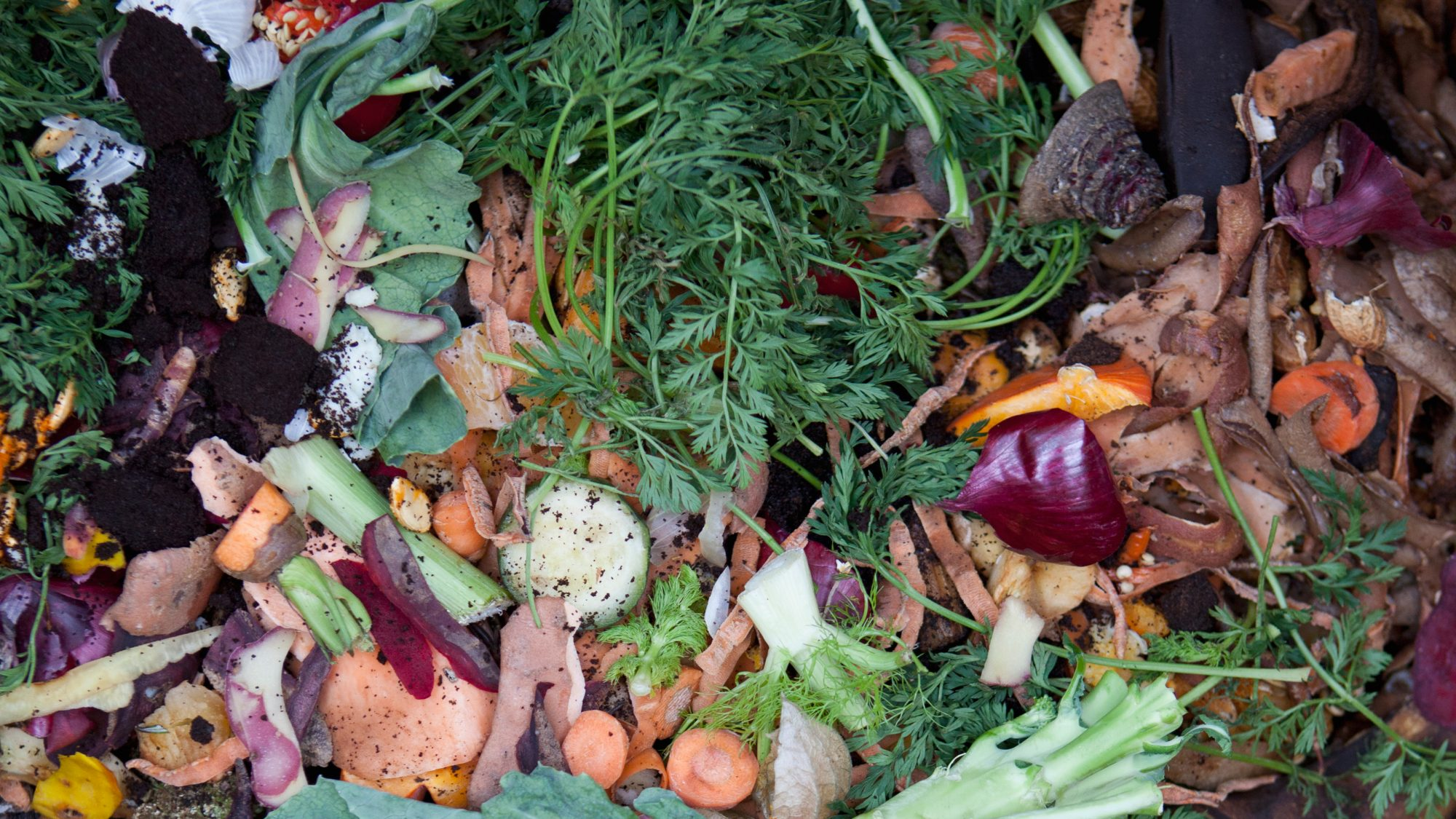 We Could Be Converting Our Food Waste Into Gas, Electricity and Fuel