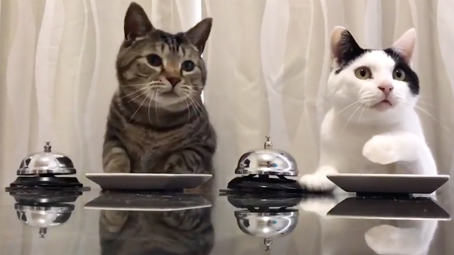We Can t Stop Watching These Cats Ringing a Bell and Getting