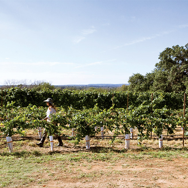 texas hill country a 2 day wine and barbecue tour food wine