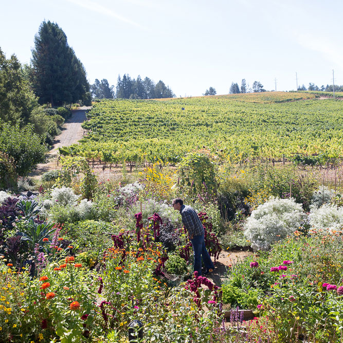 Lynmar Estate: Flowers & Flights