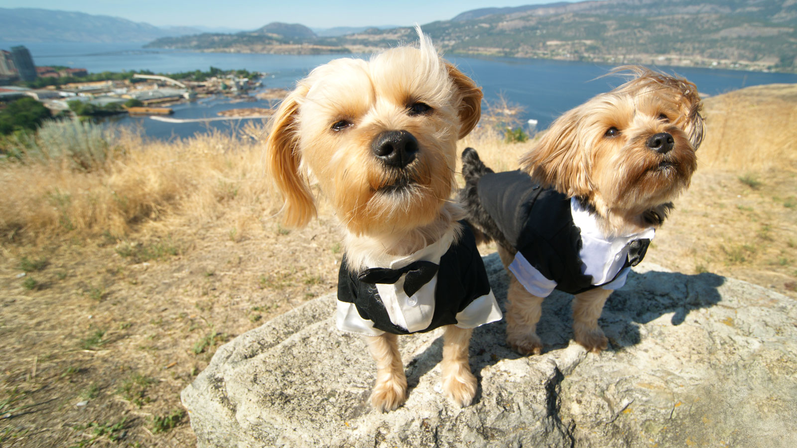 martha-stewart-dog-tuxedo-FT-BLOG0417.jpg