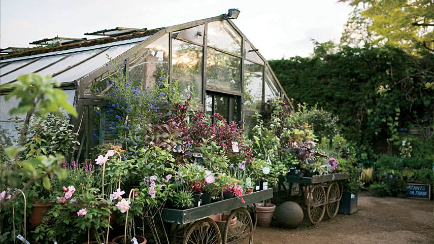 Petersham Nurseries.