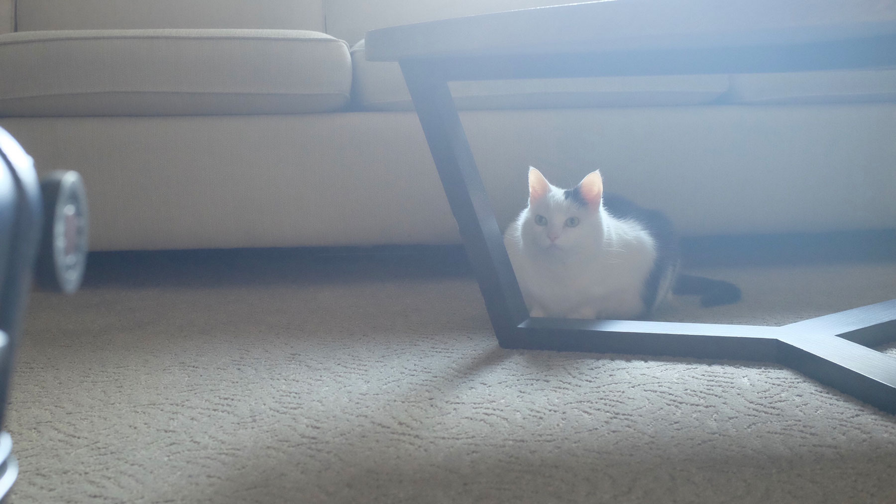 cat-hotel-table-FT-BLOG0517.jpg