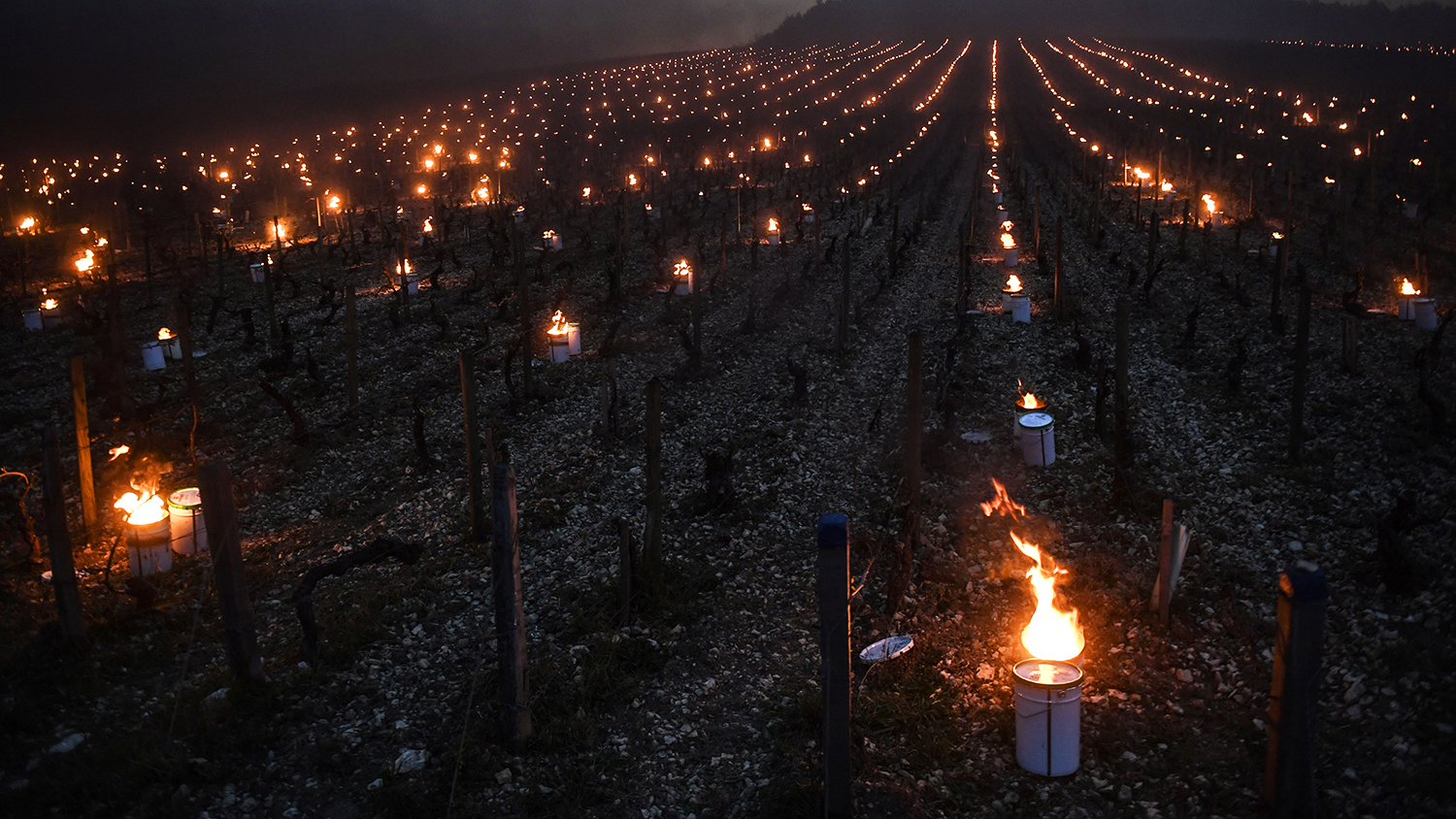 heating lamps in french vineyards