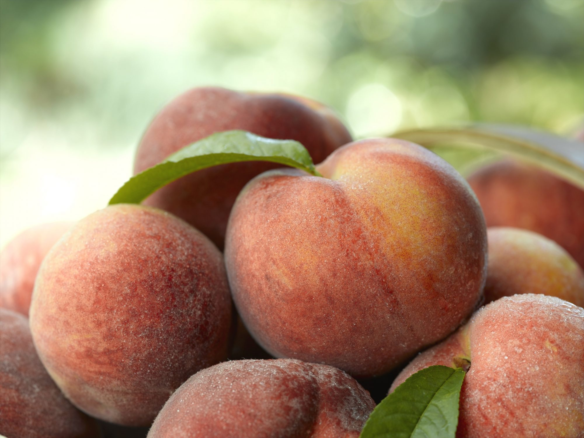 Georgia Farmers Lost 80% of Their Peach Crop This Year