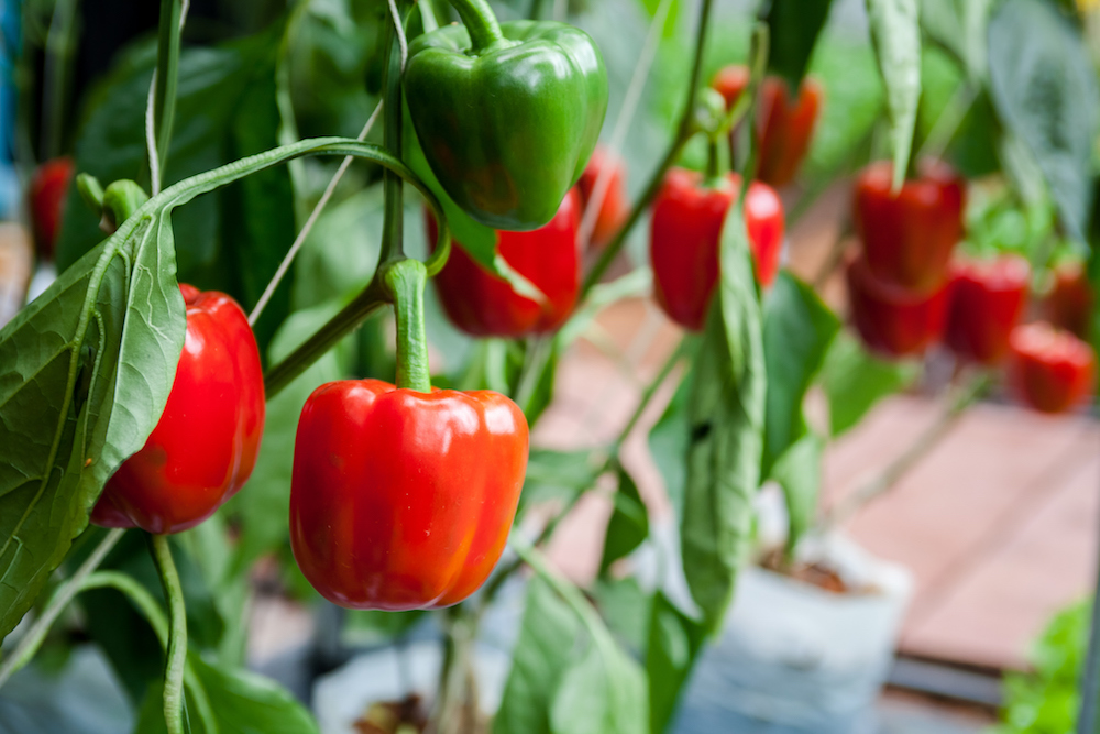 5 Foods You Can Grow From Scraps at Home | Food & Wine