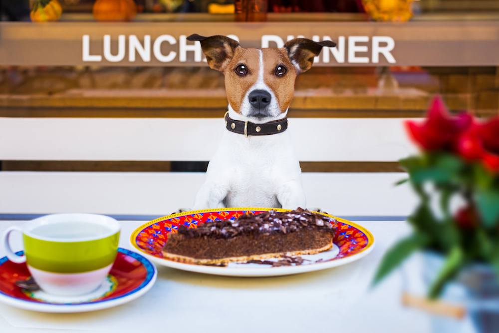 Pet-friendly restaurants