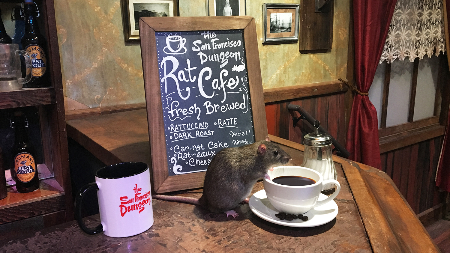 the san francisco dungeon rat cafe