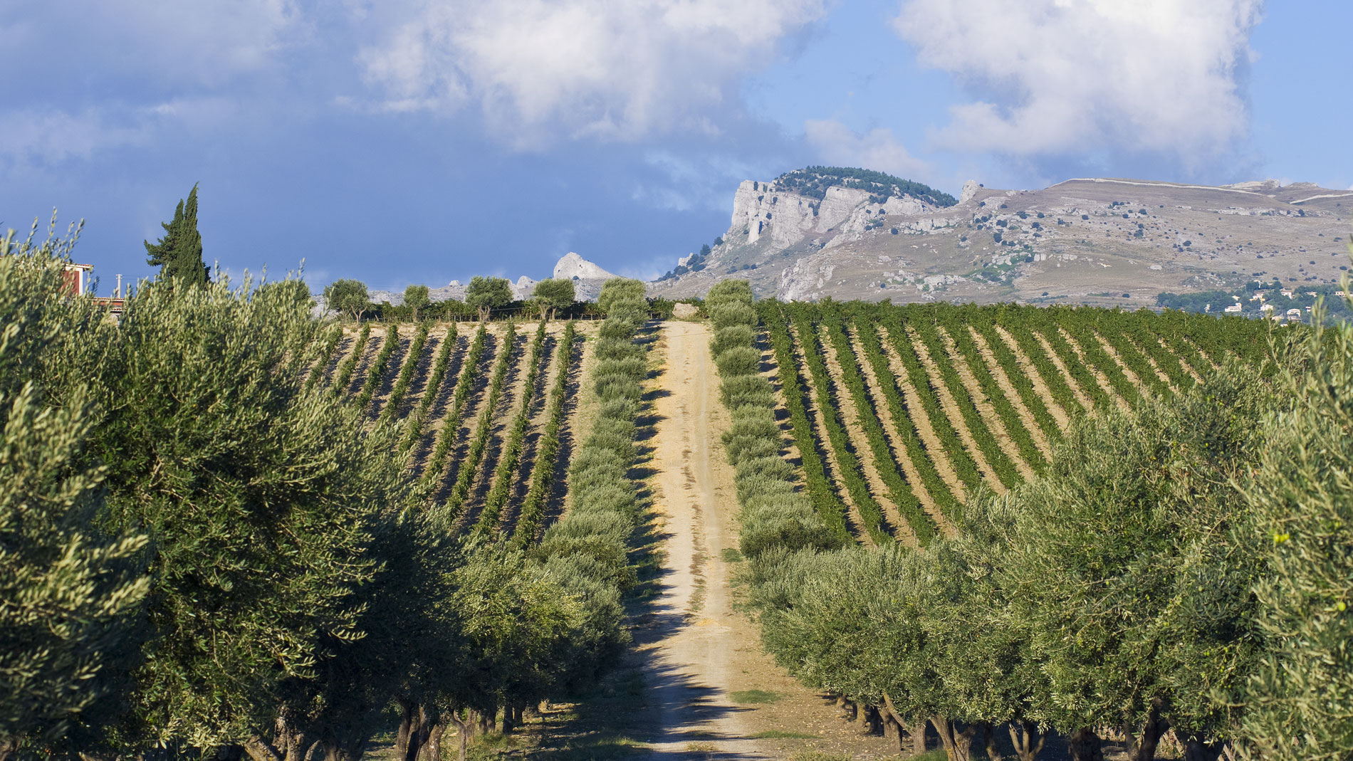 7 Bottles that Put Sicily on the Map of Trendy Wine Regions