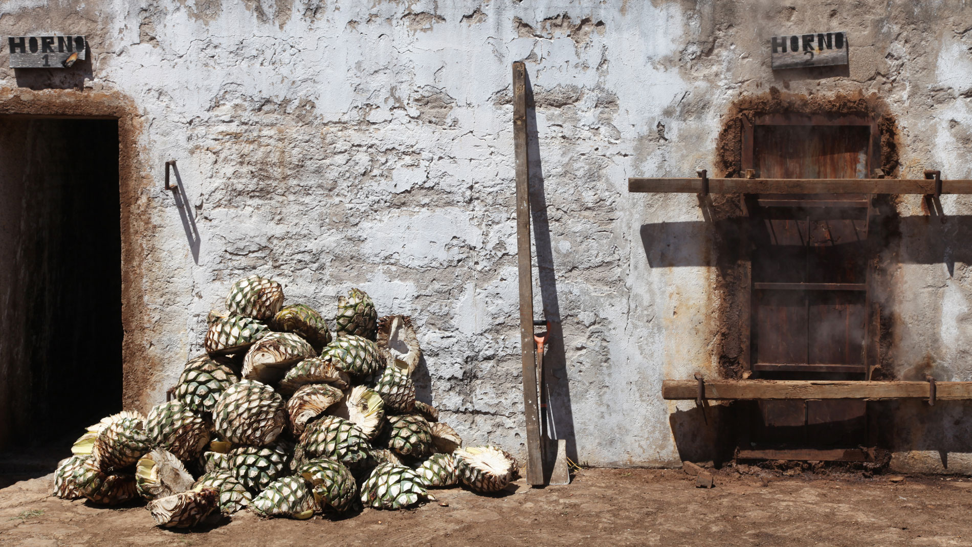 Tequila Production in Mexico