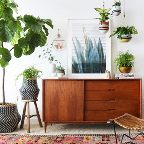 Dust Houseplants