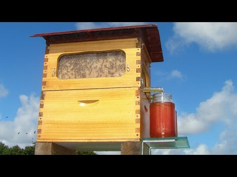 You Will Soon Be Able to Get Honey on Tap Right From the Hive