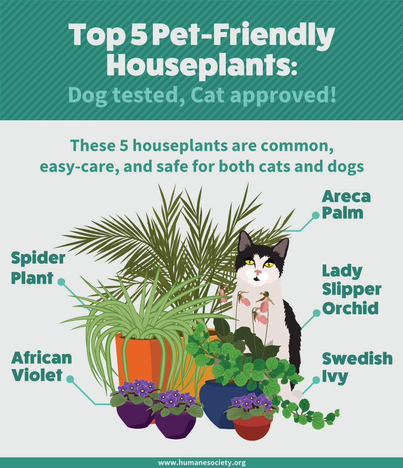 How to grow houseplants that won 39 t hurt your cat or dog for Dog safe houseplants