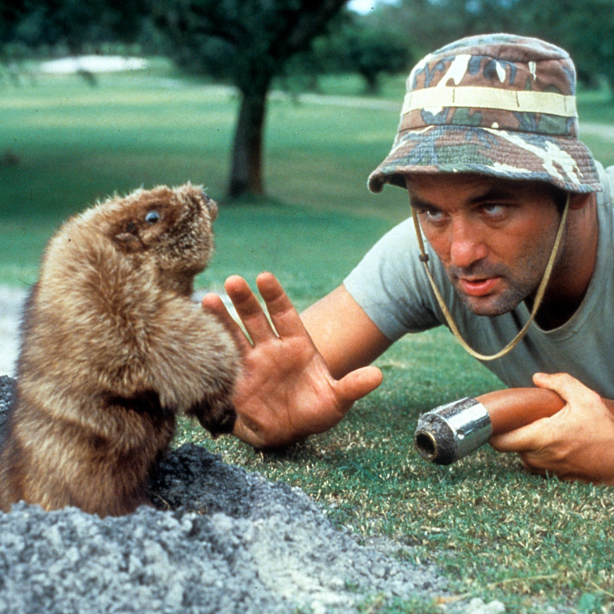 Bill Murray Is Opening A 'Caddyshack' Bar In Chicago ...