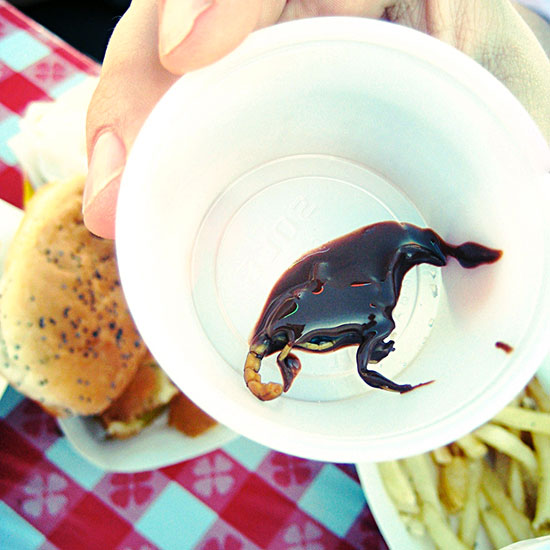 California: Chocolate-Covered Scorpions