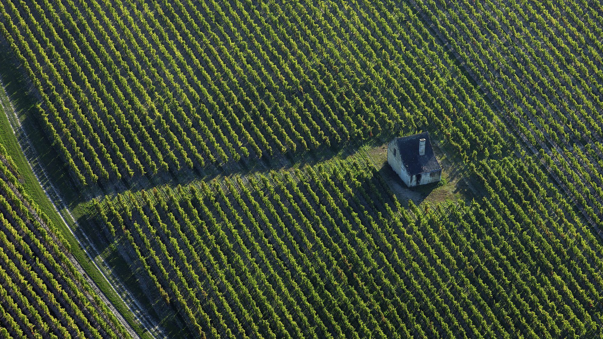 landscape of the vineyards of the Loire Valley