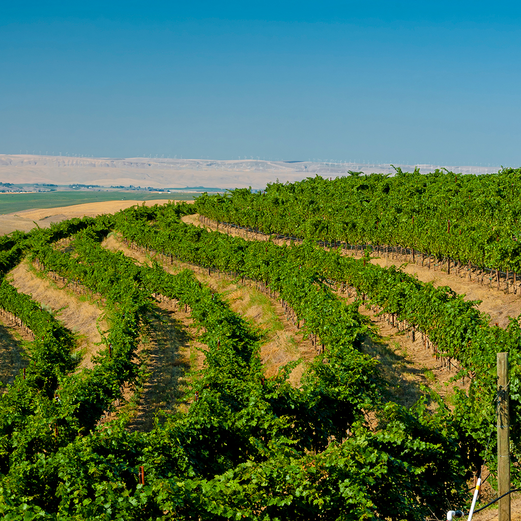 BEST WINE TRIPS FOR SPRING 2016 FWX