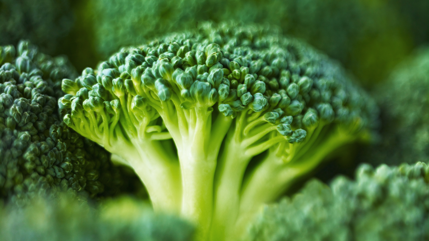 broccoli uk favorite vegetale