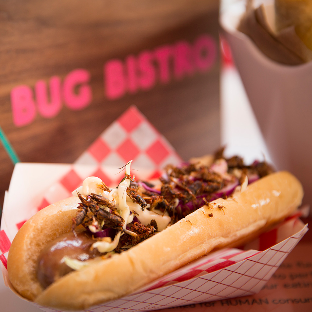bug dog, hot dog, CNE, Bug Bistro
