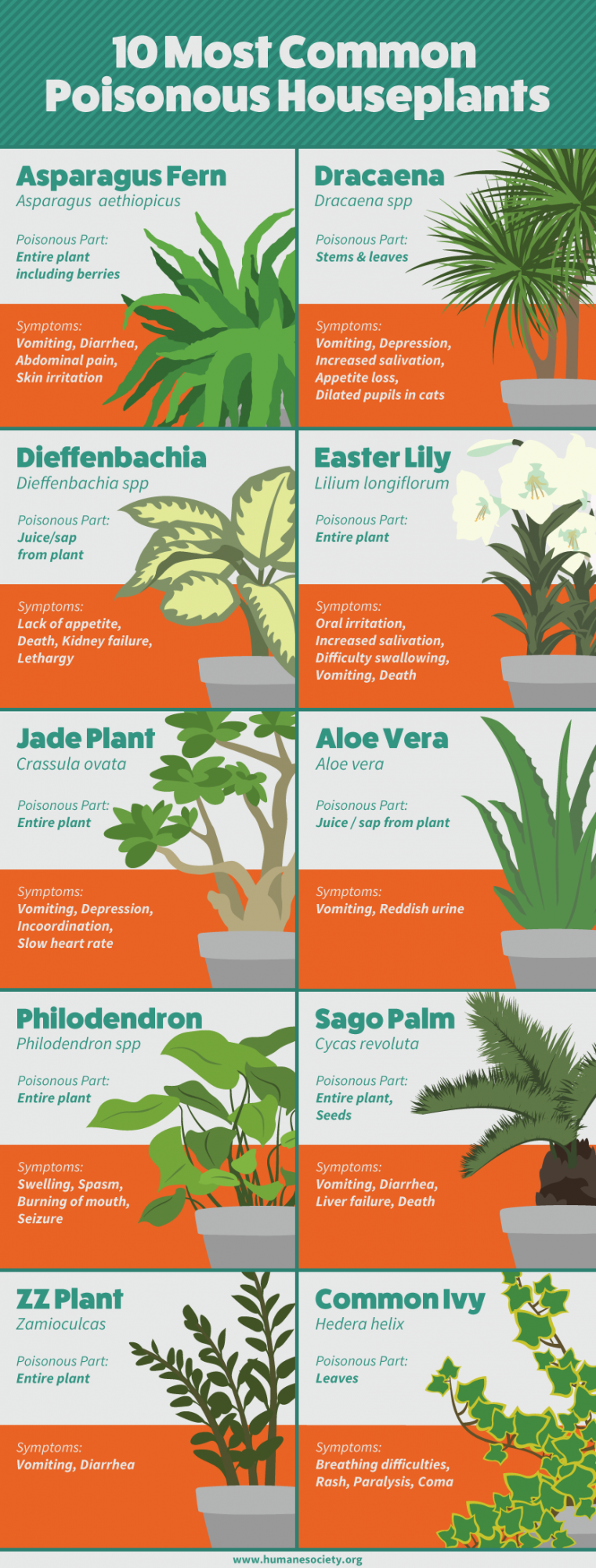 Here are the top 10 most common houseplant offenders. For a more complete  look at toxic plants (both indoors and outdoors), refer to the Humane  Society.