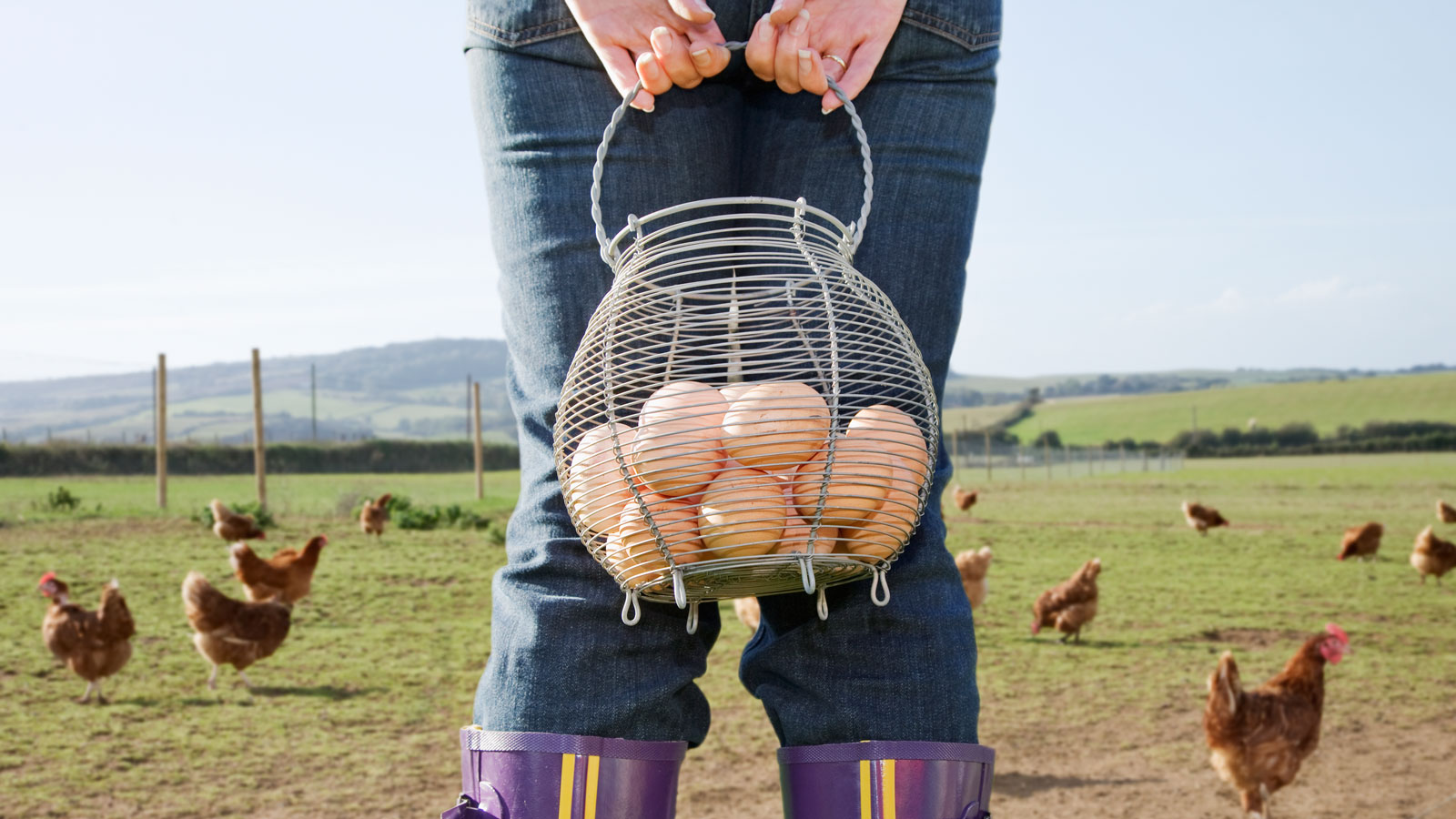 cage-free-eggs-surplus-FT-BLOG0617.jpg