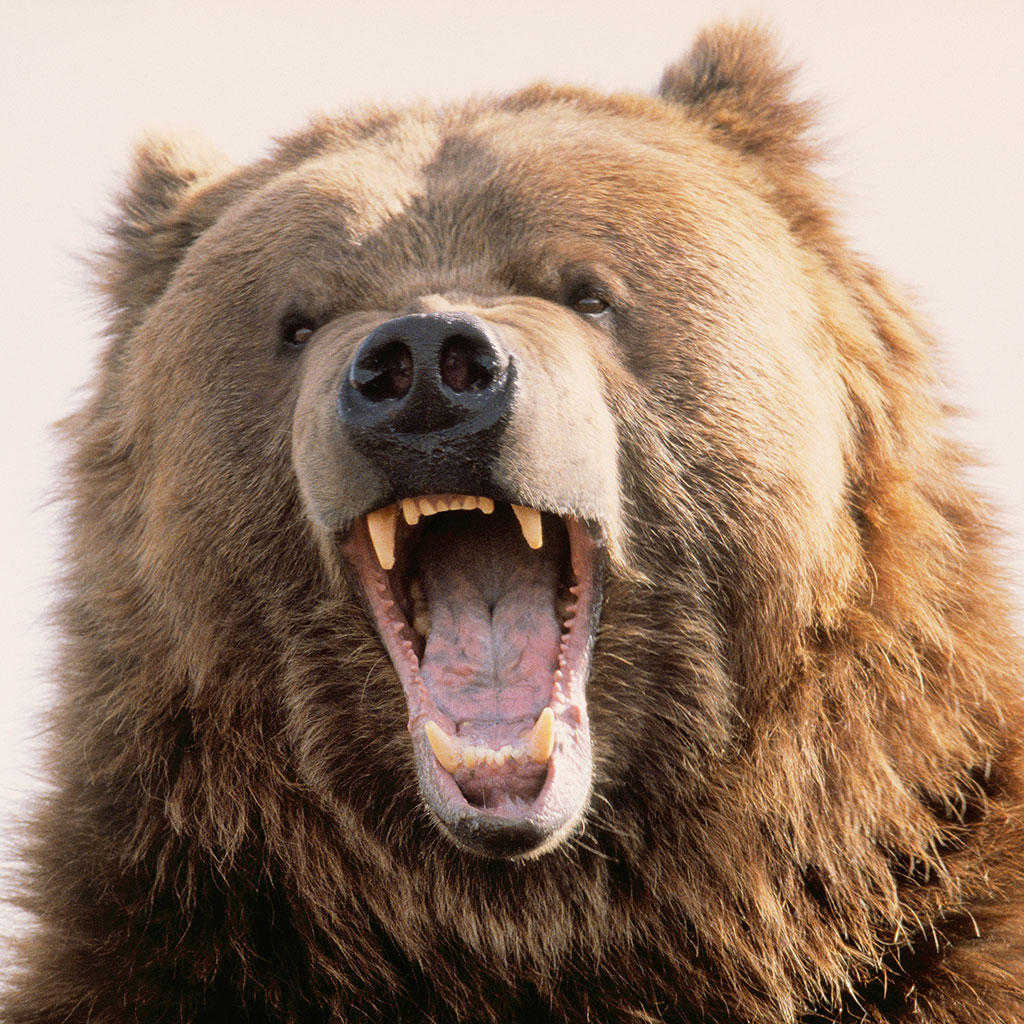 a canadian man survived a bear attack with a wine bottle