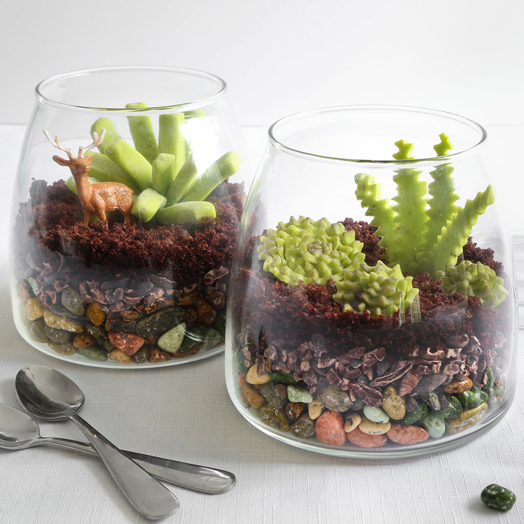 CANDY TERRARIUMS FWX 1