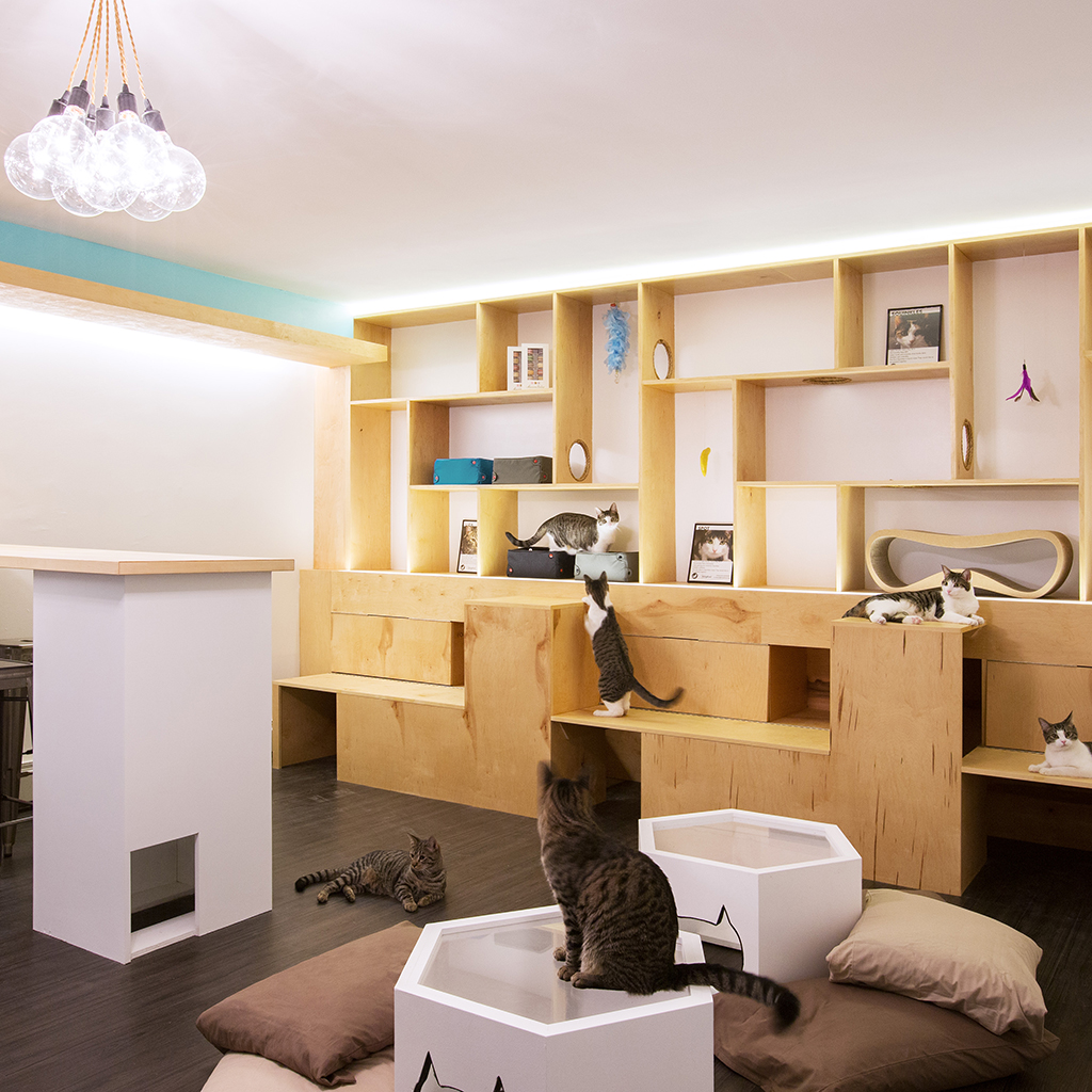 CAT CAFE FWX 2
