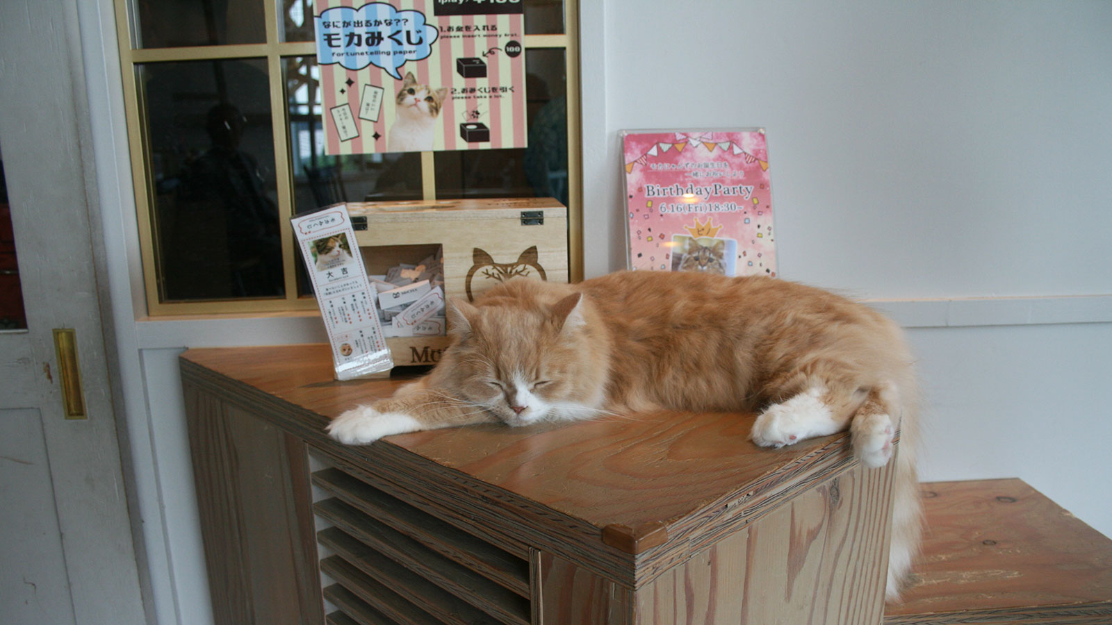 A Peek Inside Harajuku's Uber-Adorable Cat Cafe