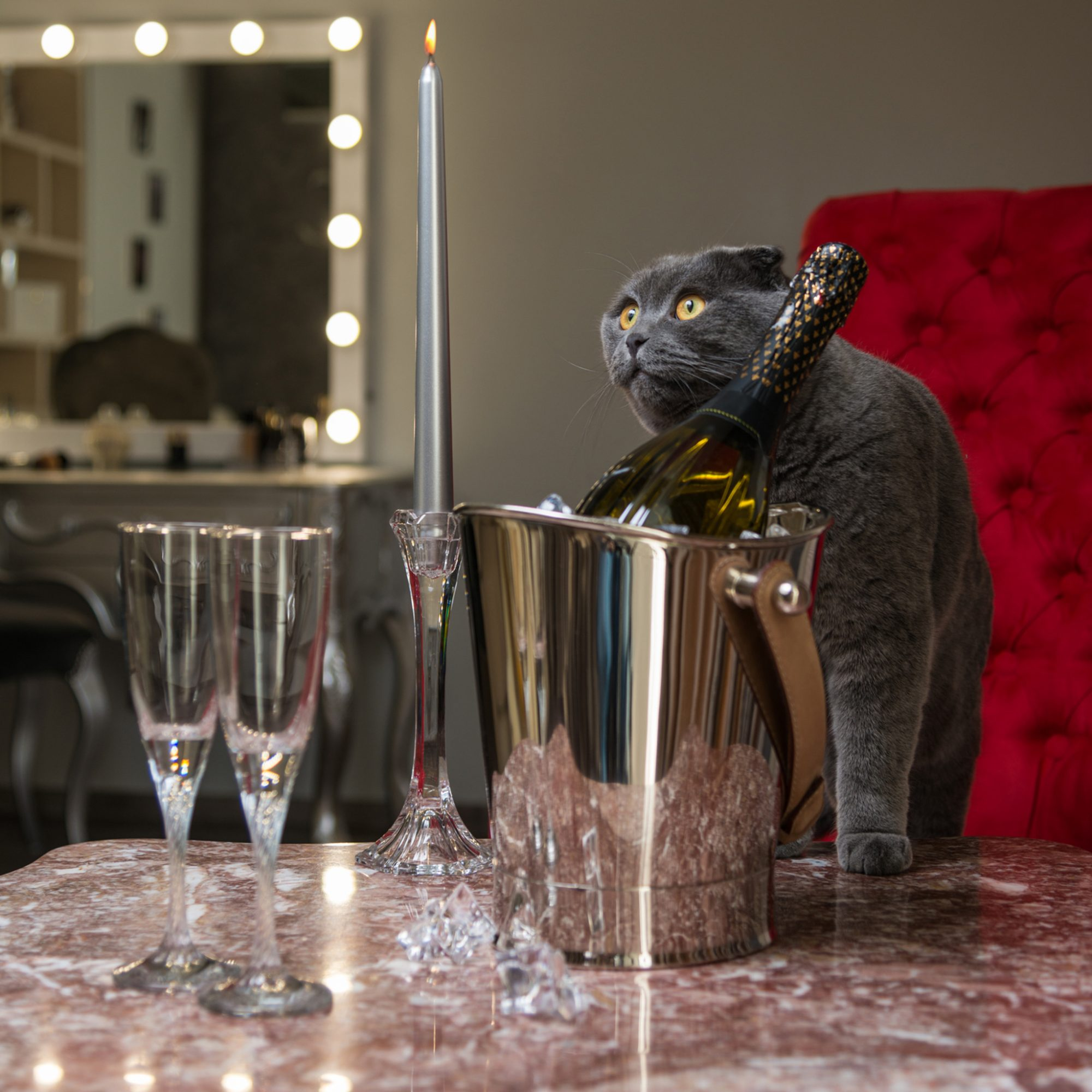 Cat Cafés Are Out, Cat Bars Are In