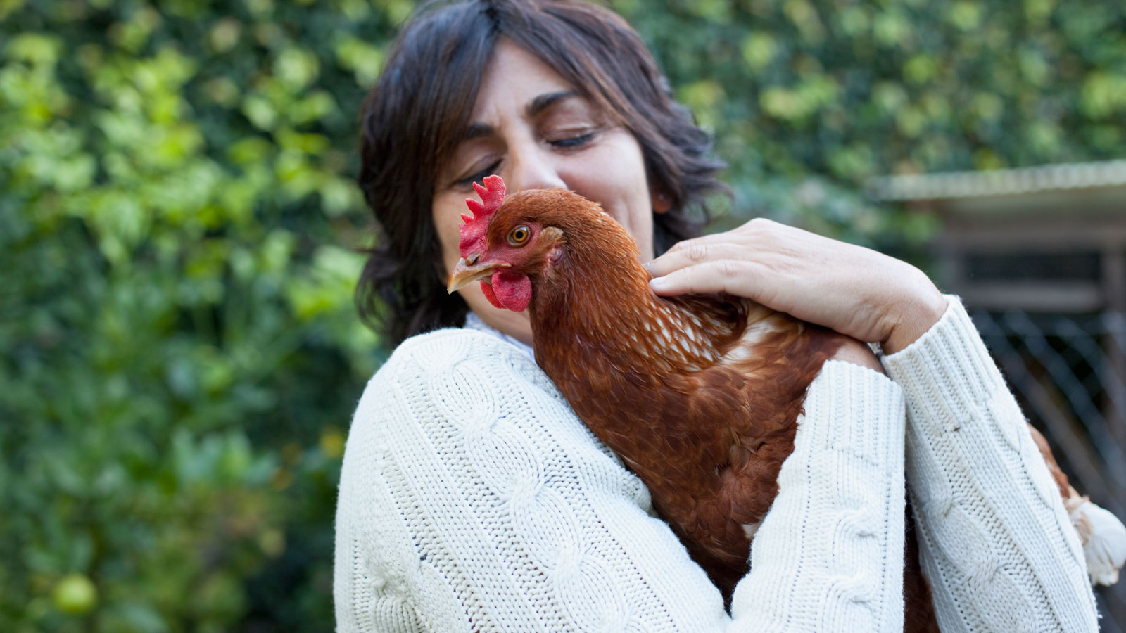 The CDC Says You Should Stop Snuggling With Chickens
