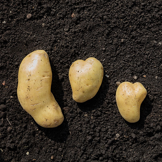 Chips Made from Ugly Potatoes Ride the Food Waste Wave to Success