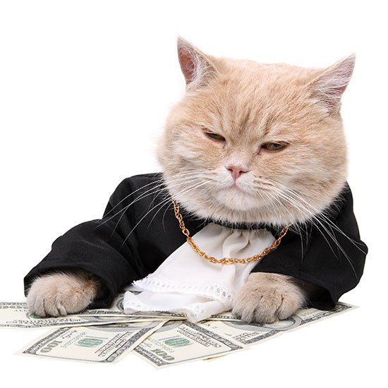 embezzling money for cat