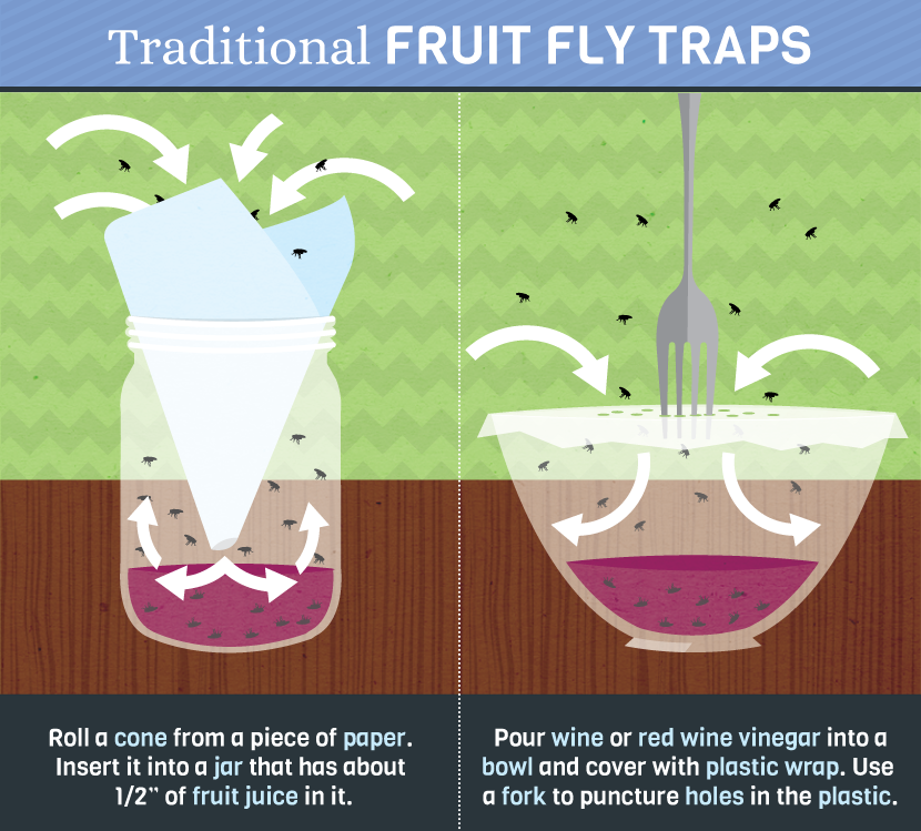 How To Really Get Rid Of Pesky Fruit Flies Food Amp Wine