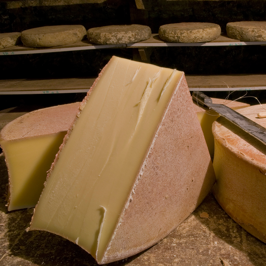 FRENCH HOUSES POWERED BY CHEESE FWX