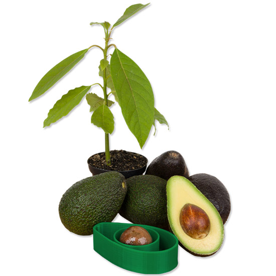 FWX AVOSEEDO WITH AVOCADOS