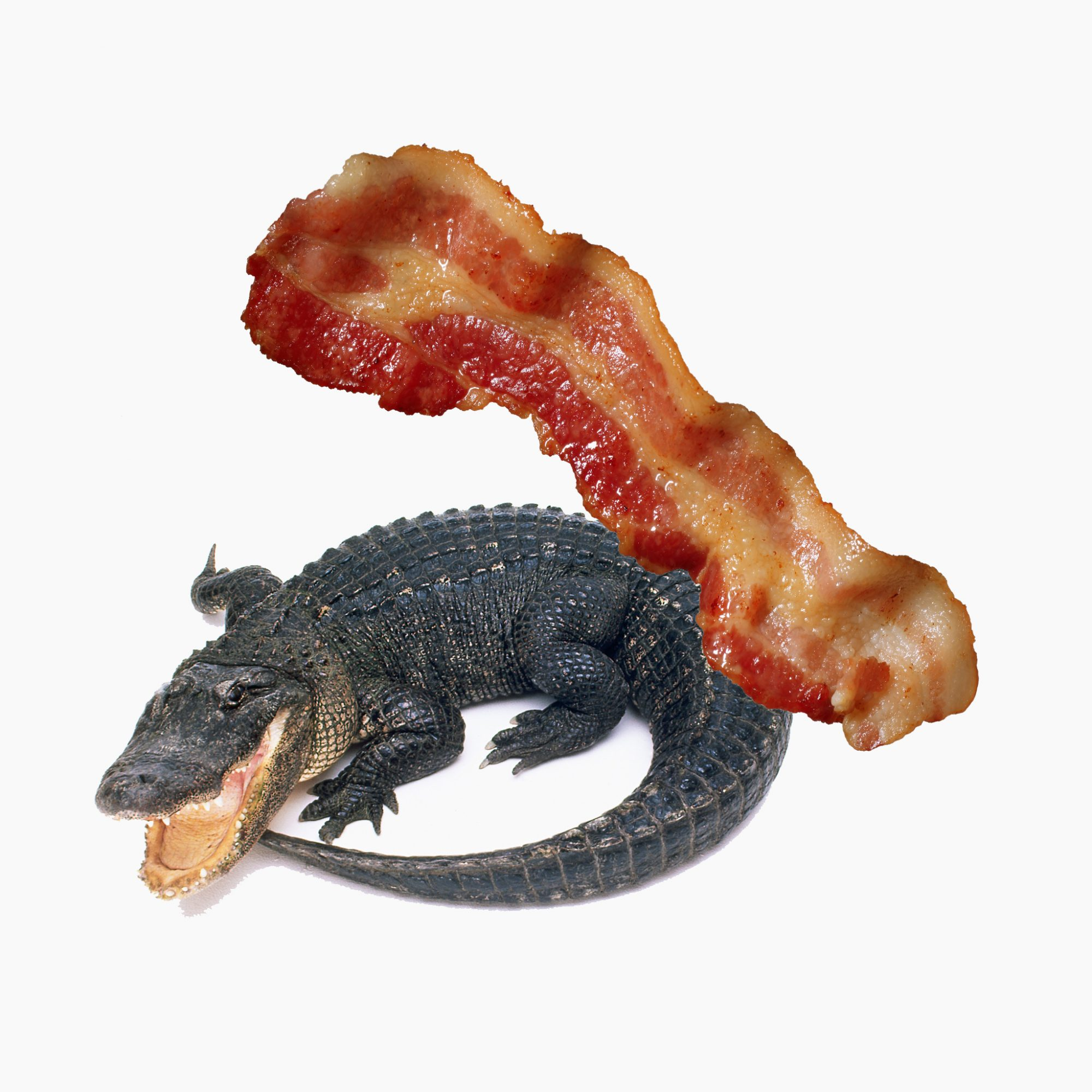 FWX BACON WRAPPED GATOR WITH TURDUCKEN