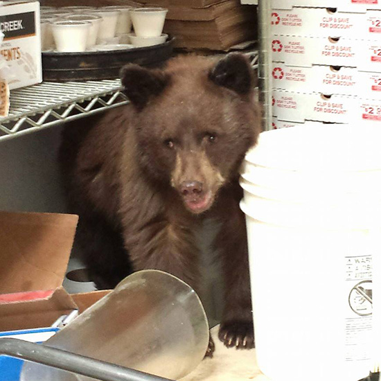 FWX BEAR CUB TAKES NAP IN PIZZA PARLOR 4